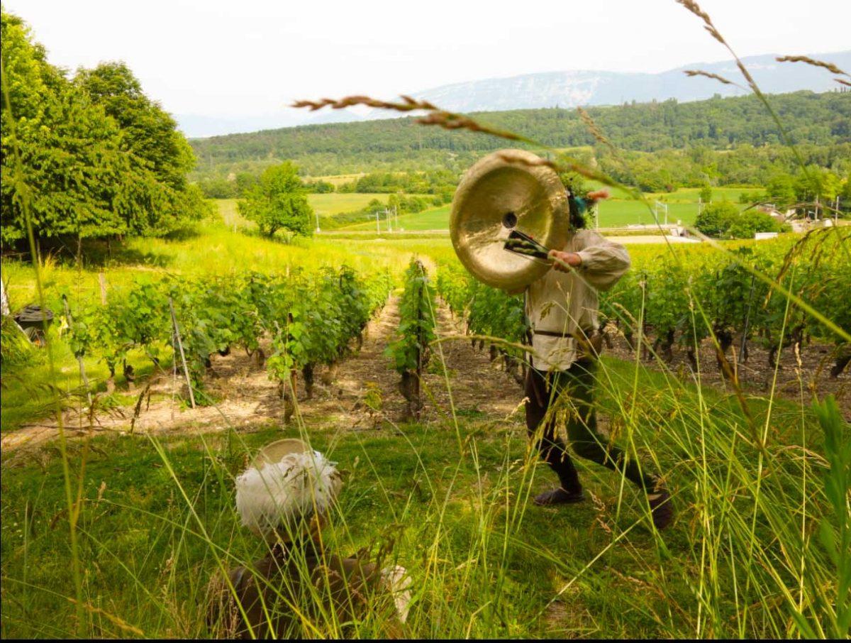 Batum Phylarcius dans les vignes! Animation médiévale